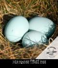 huevos-fertiles