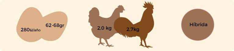 Características gallina armiñada