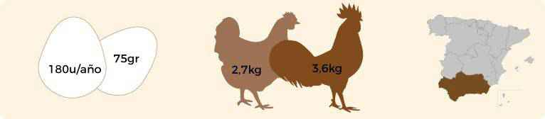 Características de la gallina andaluza franciscana.