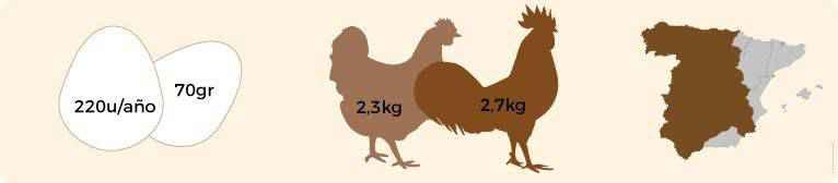 Características de huevos, peso y origen de la gallina castellana.