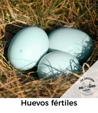 Huevos fértiles: Tu gallina online.