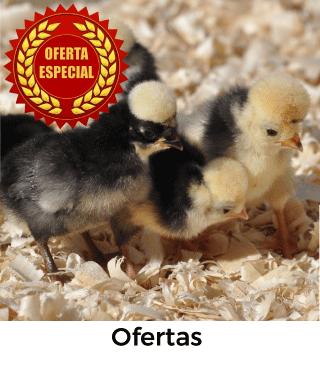Vista de las mejores ofertas de gallinas: Tu gallina online.