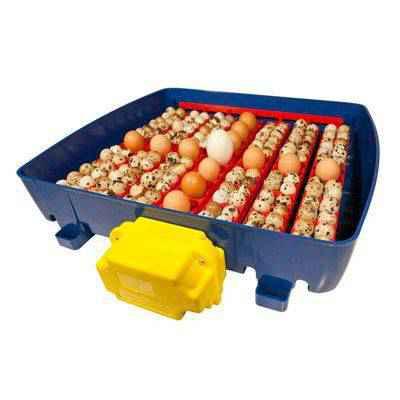 Vista una incubadora automática real: Modelo 49 huevos.