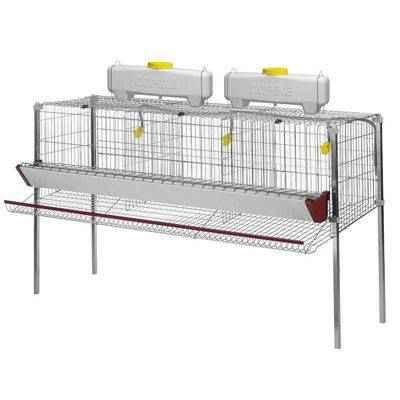 Vista de una jaula de gallinas ponederas