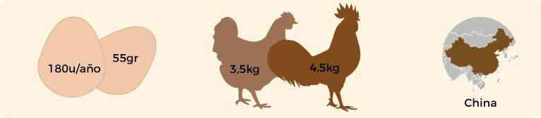 Infografia con las características de la gallina de raza Brahma