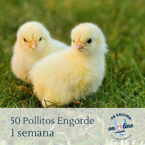 Packs 50 pollitos de 1 semana: 4 razas de pollos a elegir.