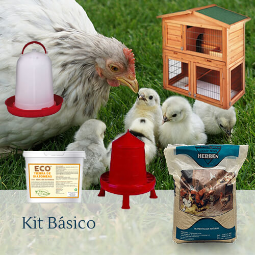 Pack básico: Productos Tu gallina online.