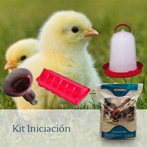 Vista de un kit de iniciación para criar pollitos.