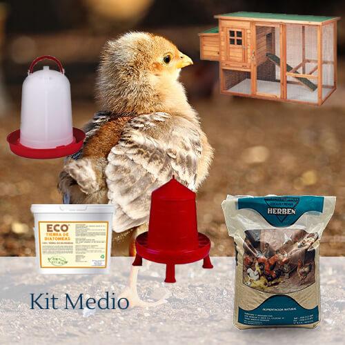 Packs medio: 5 razas de gallinas camperas y ponedoras a elegir.