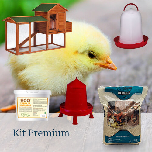 Pack premium: 8 razas de gallinas camperas y ponedoras a elegir.