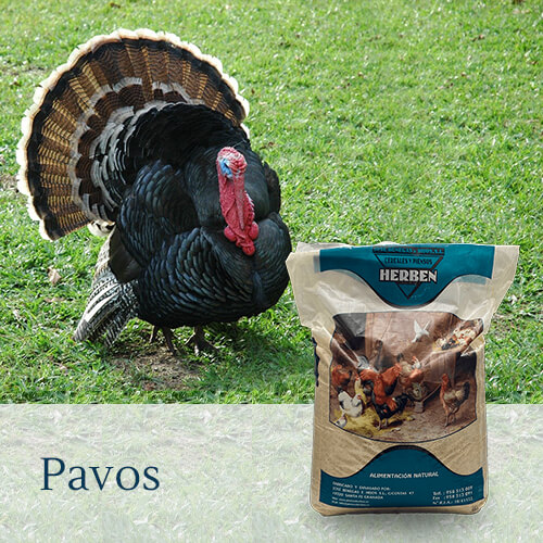 Alimentación Pavos