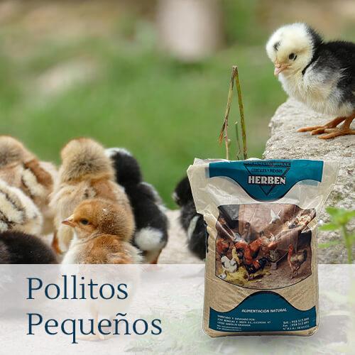 Alimentación para pollitos
