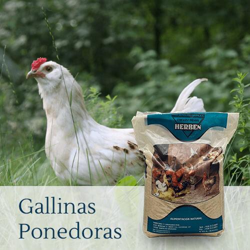 Alimentación de gallinas ponedoras