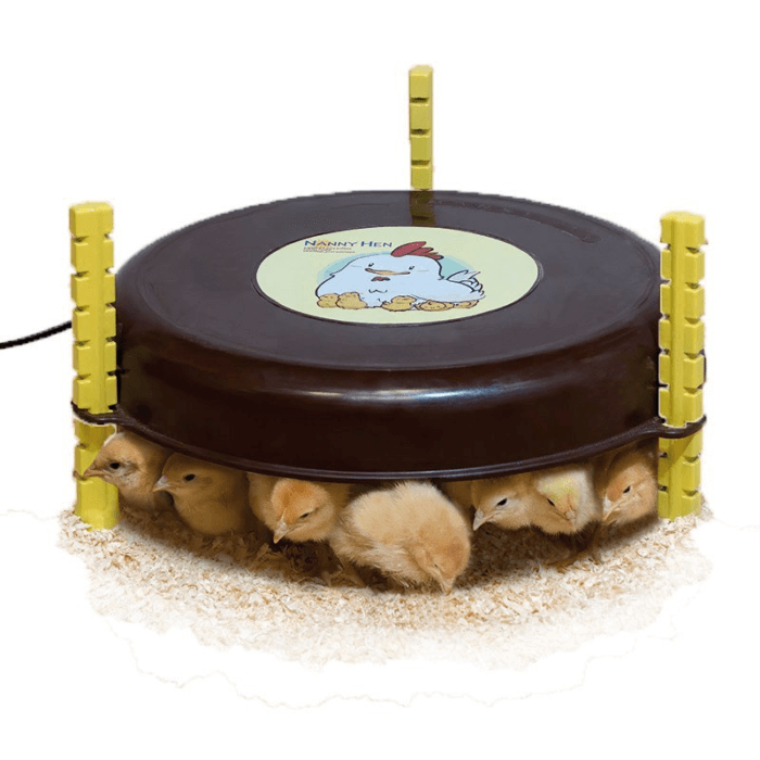 pollitos bajo calefactor de pollitos 1