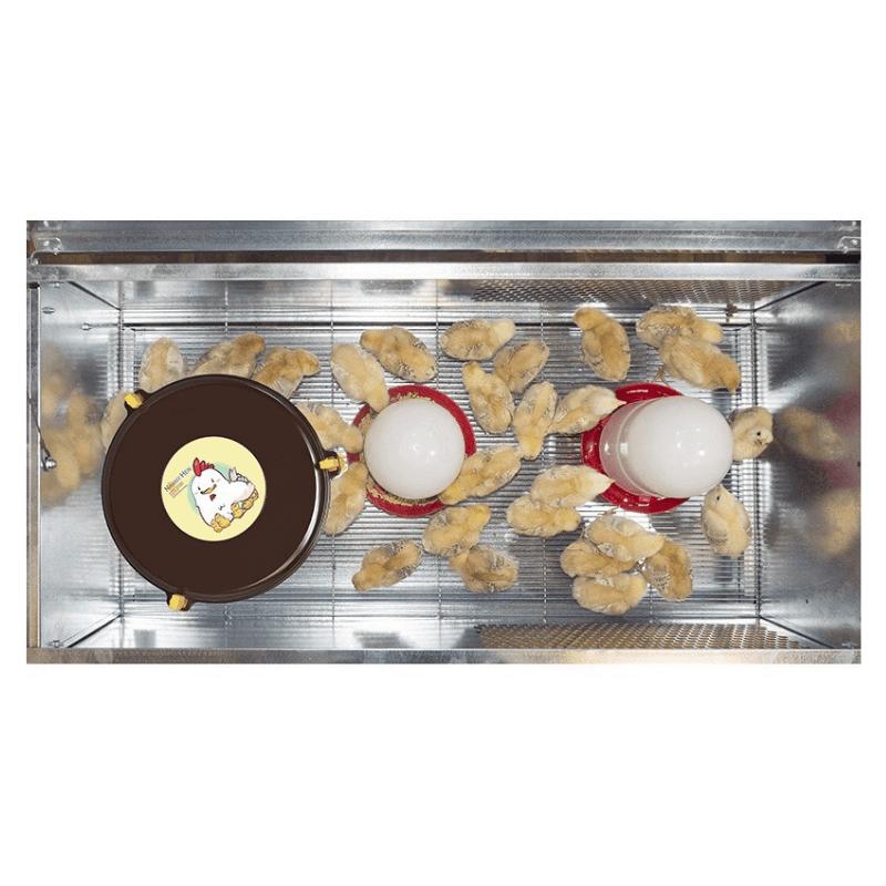 pollitos en criadora con calefactor y bebederos